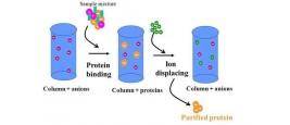 Công nghệ lọc Whey Protein - Điều bạn nên biết khi mua TPBS